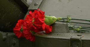 Howitzer and carnation. Carnation flowers symbol of mourning. Close up. 4K stock video footage