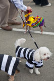 Howl'oween Pet Parade & Faire Pet Stock Image