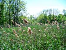Howland Park Arkivfoto