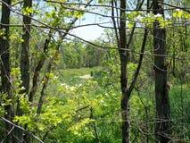 Howland Park Arkivbild