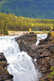 Howling Athabasca Falls in the Canada. Stock Photo