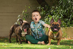 Howling Boy with Bulldogs Stock Photo