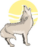 Howling Coyote Stock Photo