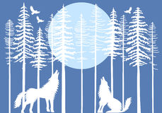 Howling wolf in fir tree forest, vector. Howling wolf in fir tree forest with blue moon, vector illustration Stock Images