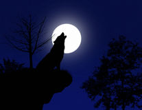 Howling wolf Royalty Free Stock Images