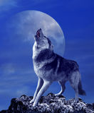 Howling wolf and moon Royalty Free Stock Images