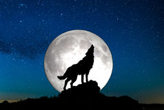 Howling wolf. A sky full of stars and a wolf howling wirg moon background Royalty Free Stock Photos