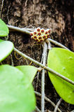 Hoya Imagen de archivo