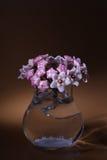 Hoya fleurit le tir de macro d'inflorescence Image libre de droits