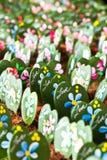 Hoya Kerii plant Royalty Free Stock Images