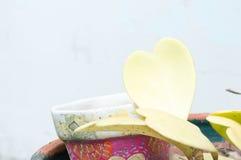 Hoya kerrii Craib w garnku, sympatia Hoya (serce kształtująca roślina) zdjęcie stock