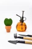 Hoya plant Stock Photo
