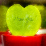 Hoya Plant in the shape of a heart Stock Photo