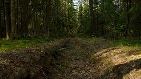 Hoyo del fuego en el bosque almacen de metraje de vídeo