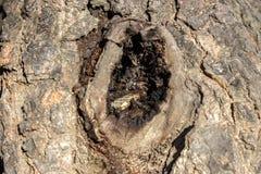 Hoyuelos en el árbol fotografía de archivo