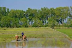 HPA-AN,缅甸- 10 02 耕领域的2016缅甸人农夫 图库摄影
