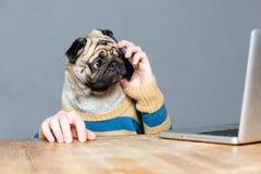 Häpen man med mopshundhuvudet som talar på mobiltelefonen Arkivfoton