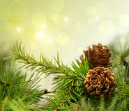 HPine Cones On Branches Stock Images