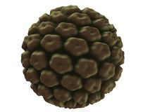 Hpv virus Royalty Free Stock Image