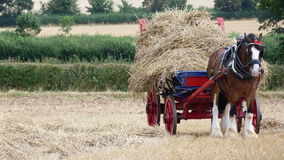 Hrabstwo koń z słomianym furgonem przy kraju przedstawieniem Fotografia Stock