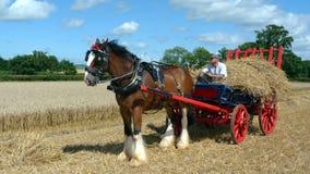 Hrabstwo koń z słomianym furgonem przy kraju przedstawieniem Zdjęcie Stock