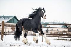 Hrabstwo koń Fotografia Royalty Free
