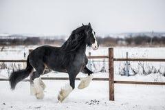 Hrabstwo koń Obrazy Royalty Free