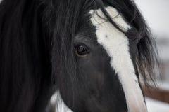 Hrabstwo koń Obrazy Stock