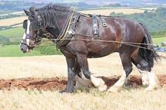 Hrabstwo koni przeorać Fotografia Royalty Free