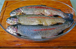 Hree rainbow trouts (Salmo gairdneri) in a glass pan Stock Images