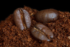 Hree roasted coffee beans on ground coffee. Stock Images