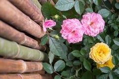 Hristopher Marlowe Rose Imagens de Stock