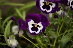 Härlig blomma på en naturlig bakgrund Arkivbilder