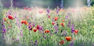 Härlig blomningäng med lösa blommor Arkivbilder