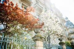 Härlig boulevard med lönnträdet och äppleträdet Arkivfoton