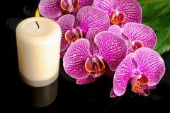 Härlig brunnsortstilleben av att blomma fattar den avrivna violetta orkidén Royaltyfri Fotografi