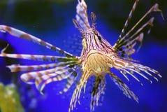 härlig fisk Royaltyfri Fotografi
