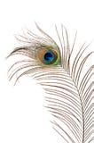 Härlig fjäder av en påfågel som isoleras på vit Royaltyfri Fotografi
