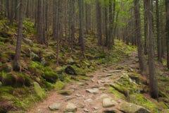Härlig grön skog med en vandringsled Arkivbilder