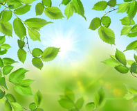 härlig grön soft för bakgrund Royaltyfri Fotografi