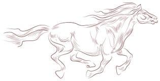 härlig häst Arkivfoton