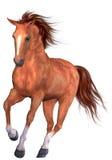 härlig häst Arkivbilder
