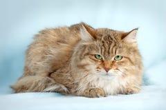 härlig katt Royaltyfri Fotografi