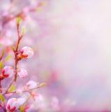 Härlig konst fjädrar den blomstra treen på skybakgrund Royaltyfri Fotografi