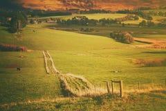 Härlig lantlig jordbruksmark australasian Arkivbilder