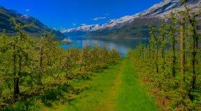 härlig norway för liggande för fiordhardangerfjordhordaland region Arkivbilder