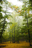 härlig skog Fotografering för Bildbyråer
