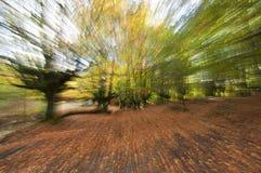 Härlig skog i höst med zoom effekt Arkivbild
