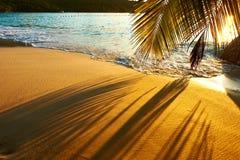 Härlig solnedgång på den Seychellerna stranden med palmträdskugga Royaltyfria Bilder