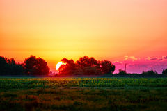 Härlig soluppgång som behing träden över ett fält av solrosor Royaltyfria Foton